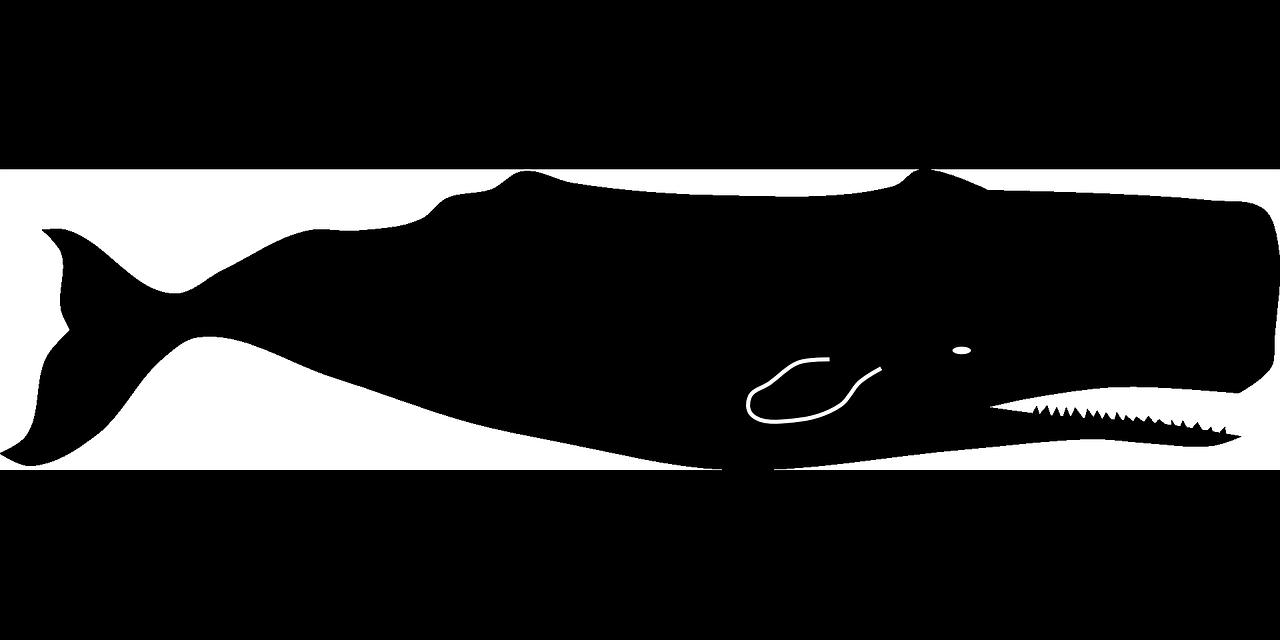 sperm-whale-160805_1280