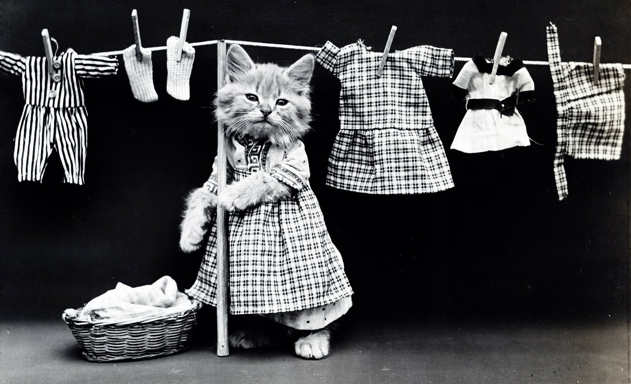 cat, kitten, laundry, detergent, black and white, old school cool, petroleum, industrial outpost