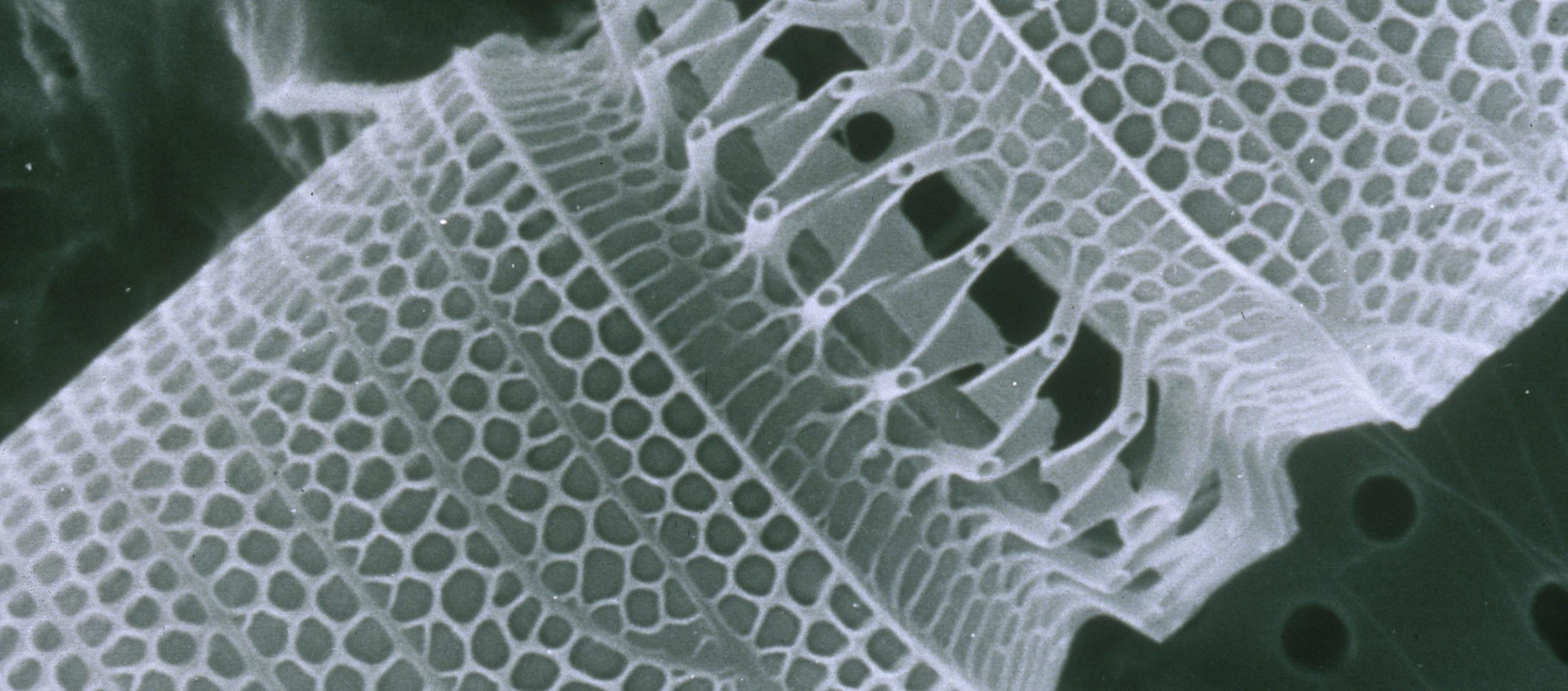 An close-up of a nanotube. Photo courtesy of CSIRO Science Image.
