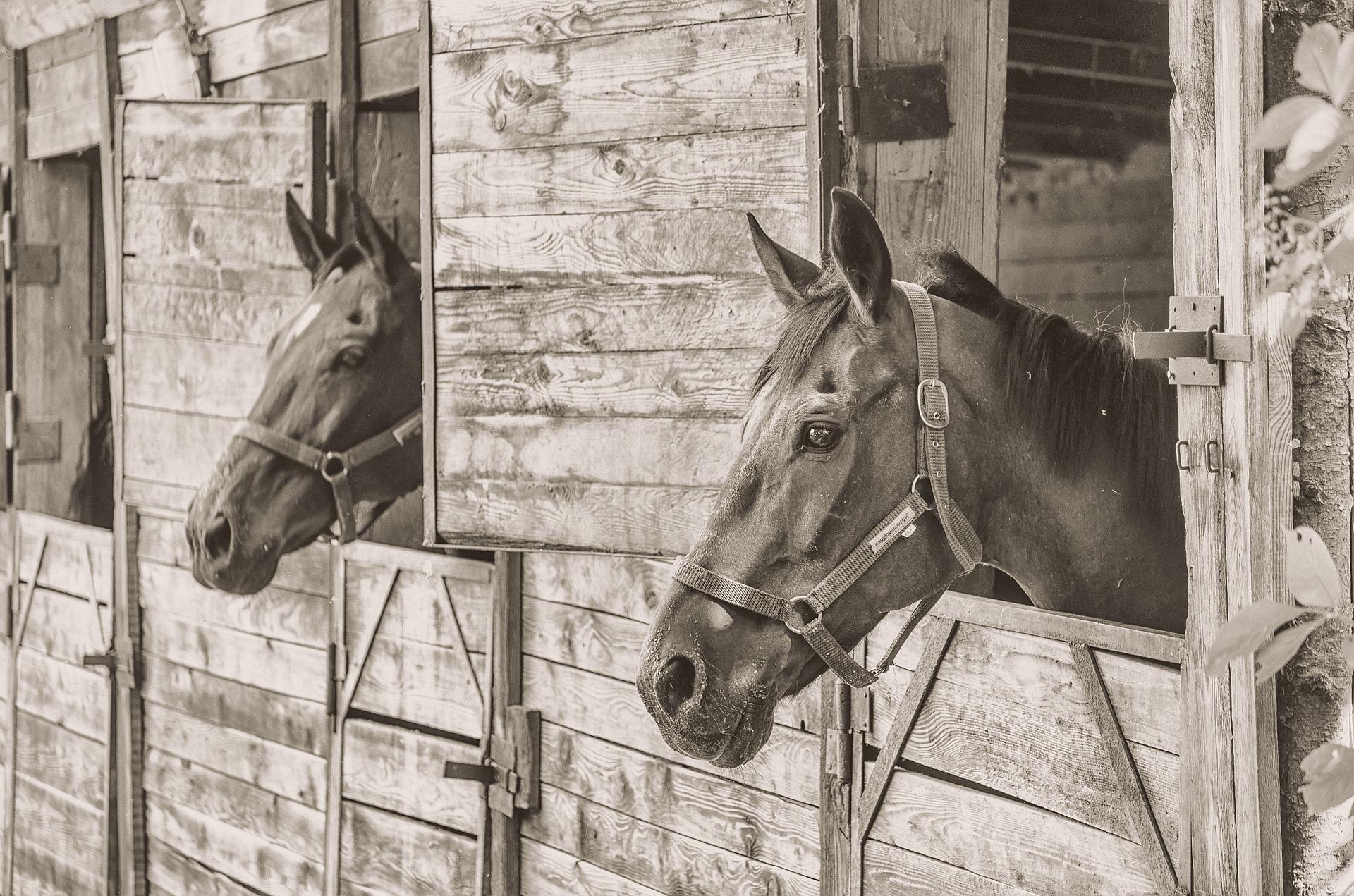 horses, horse manure crisis, photography, animal photography, great horse manure crisis of 1894
