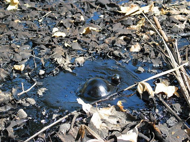 tar pit, la brea tar pit, methane bubble