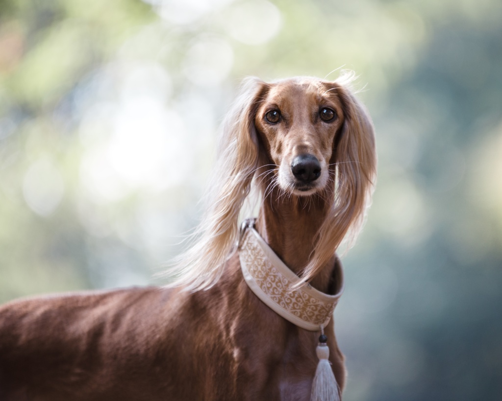 small dog wearing dog collar